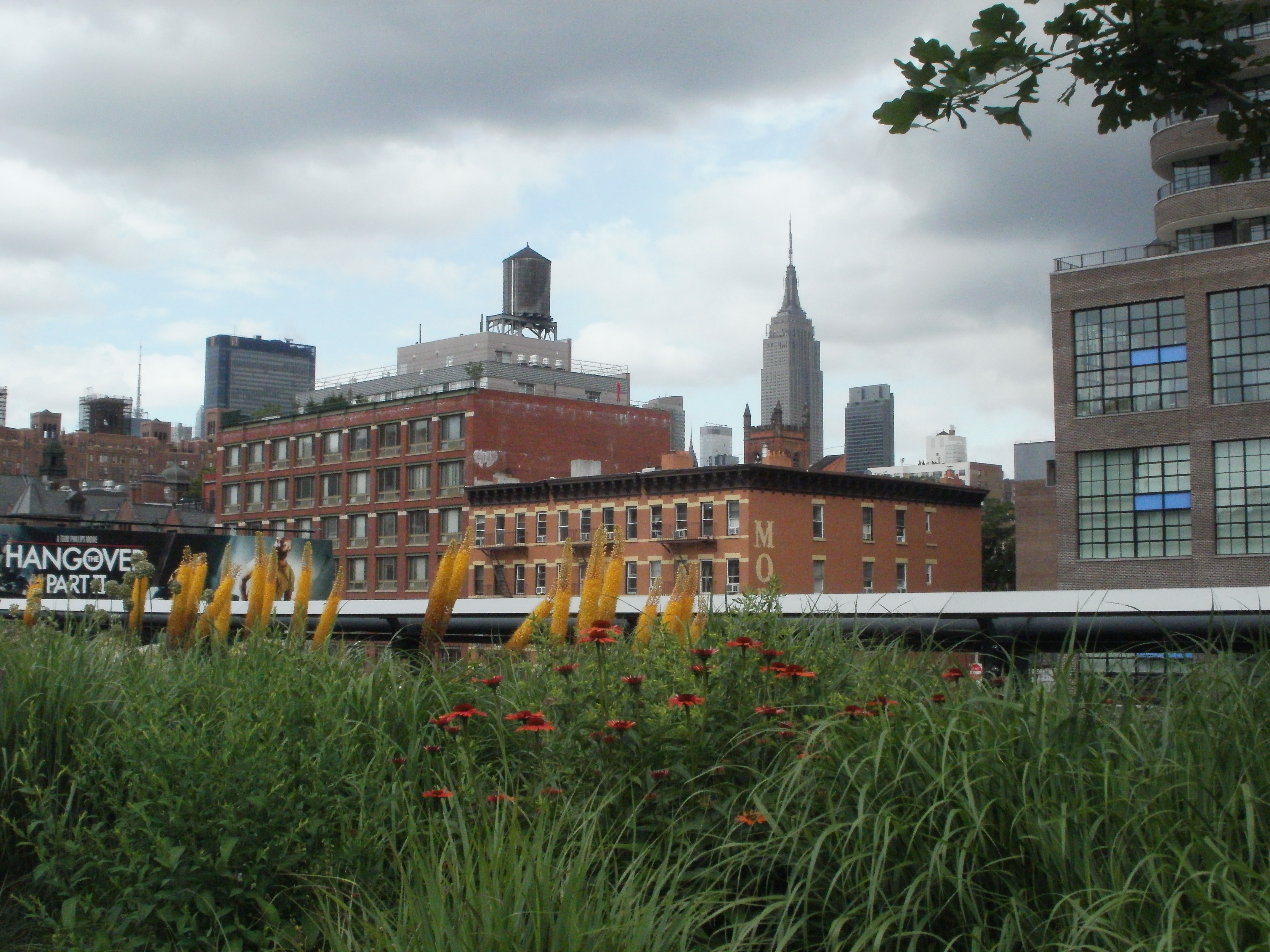 Week one along the high line section two wildflowers of for Urban nature