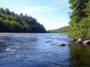 Hudson River as Trout Stream (photo taken 06 22 2014)