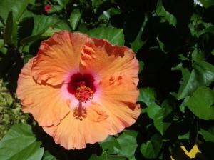 Hawaii 5 10 2014