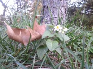 Nightshade & Oak Leaf