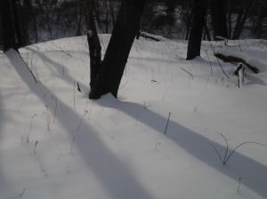 Parallel (Manhattan Snowfield After the Blizzard of 2015)