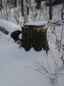 Snow Stump Brackets (NYC 01 2015)