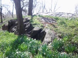Heart of the Earth: An escarpment of Manhattan schist in Riverside Park, Spring. (photo taken 04 2015)