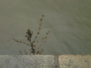 Brown Flower (NYC 01 2017)