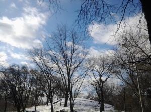 January Snow (NYC 01 2017)